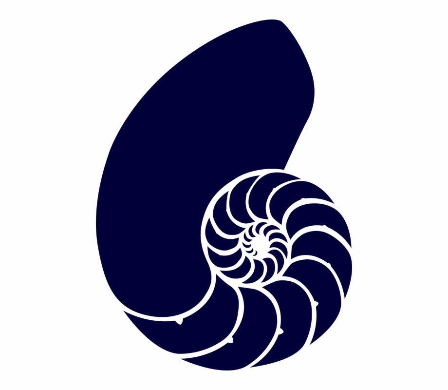 Shell clipart fossil. Sea blue spiral navy