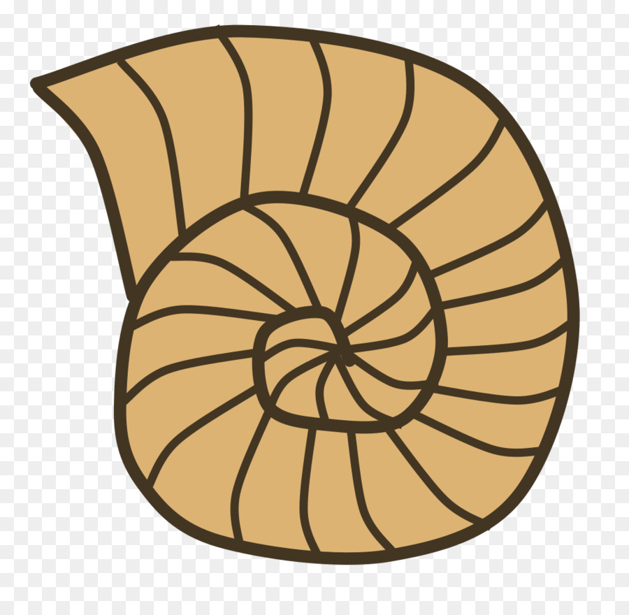 Clip art openclipart seashell. Shell clipart fossil