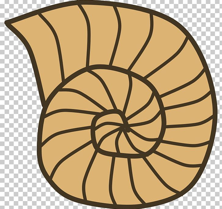 Seashell snail mollusc png. Shell clipart gastropod