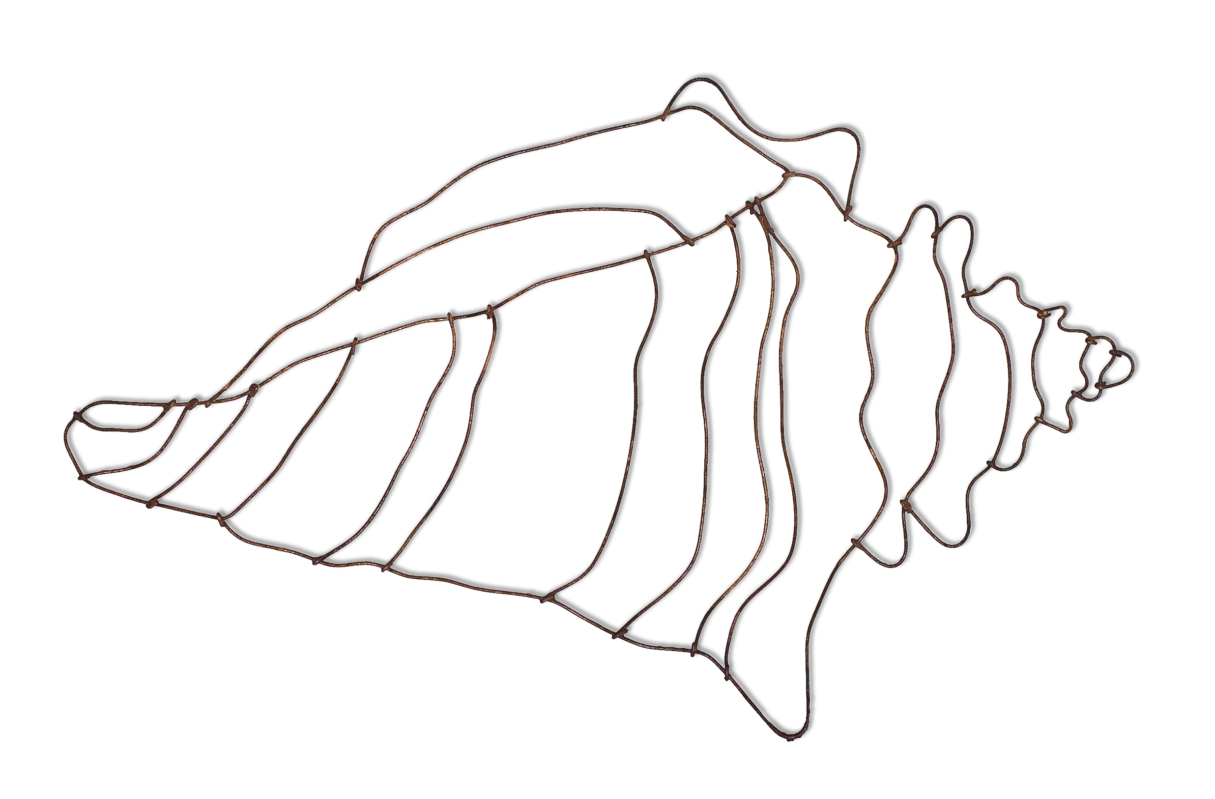 Free how to draw. Shell clipart horn