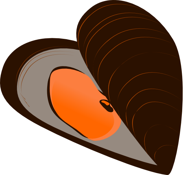 Shell clipart mussel drawing. Clip art at clker
