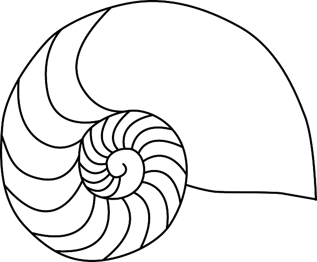 Shell clipart nautilus. Drawing at getdrawings com