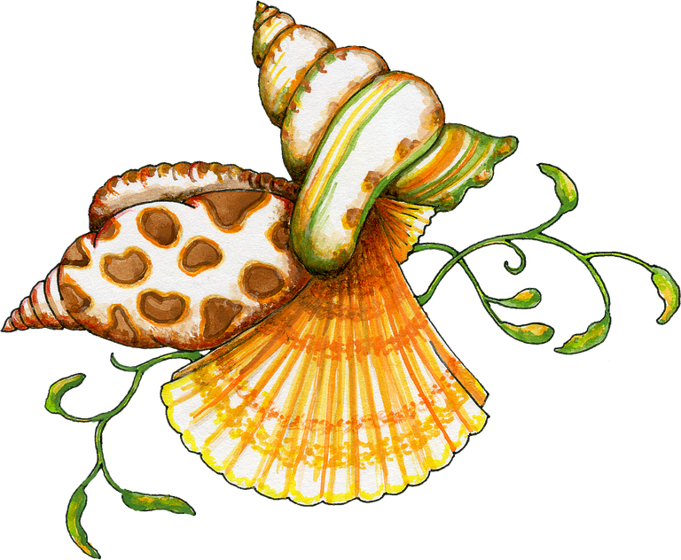 Shell clipart orange clipart. Free transparent png files