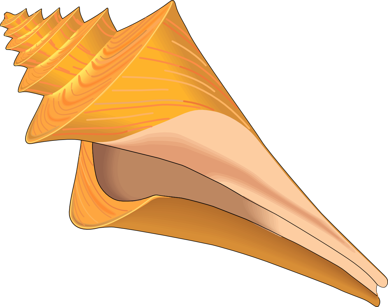 Conch clip art many. Shell clipart orange clipart