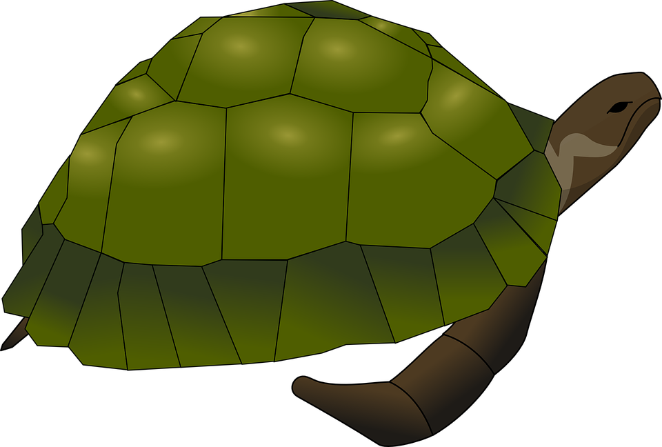 Shell clipart page. Turtoise turtle free collection