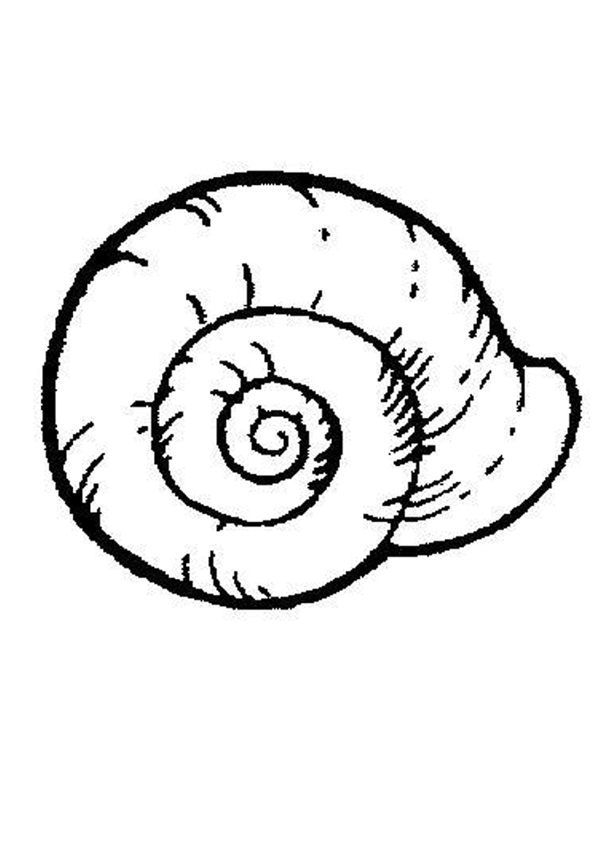 Free sea download clip. Shell clipart page