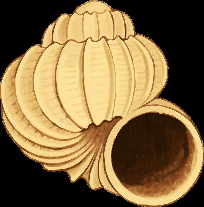 Shell clipart pixel. Free photo seaside ocean