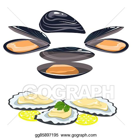 Shell clipart sea foods. Vector food shells of