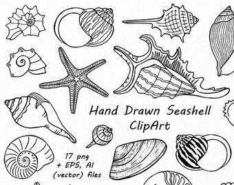 Big set of doodle. Shell clipart sea life