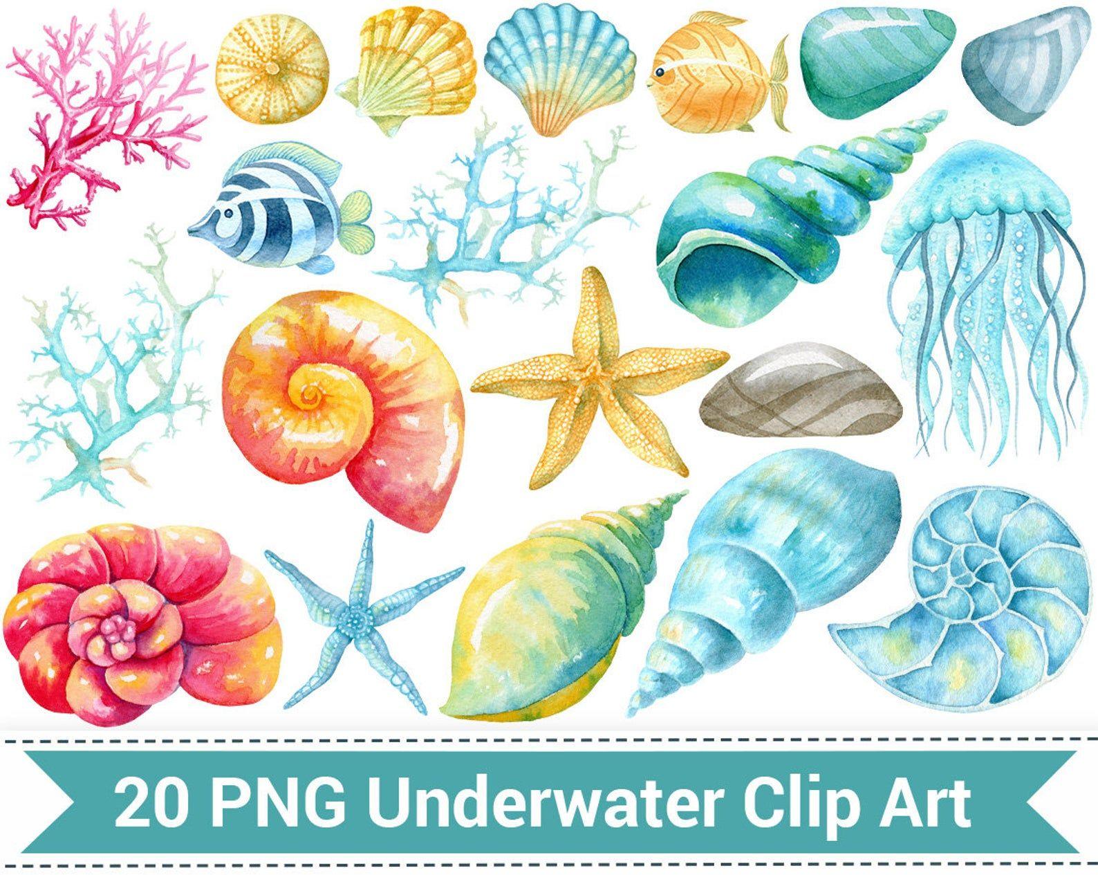 Shell clipart sea life. Nautical watercolor underwater clip