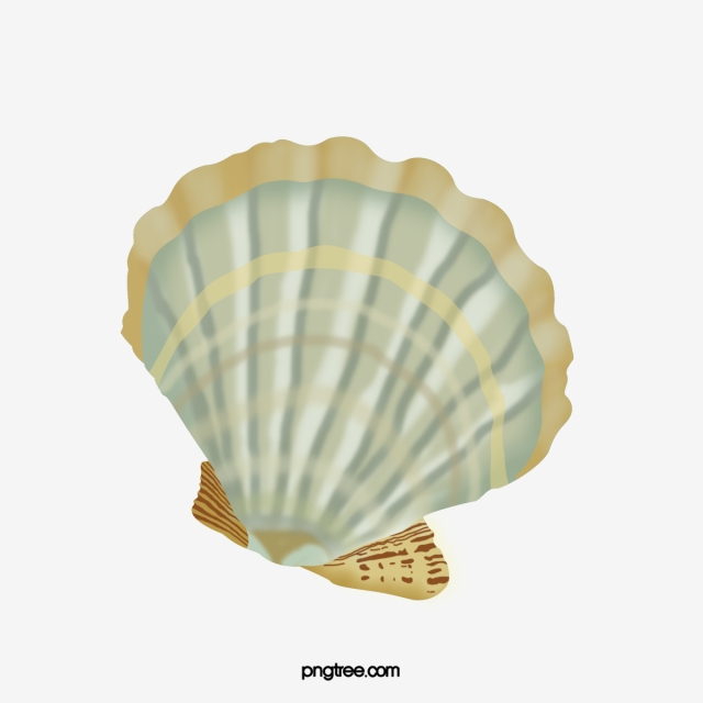 Shell clipart sea side. Seaside beach shells png