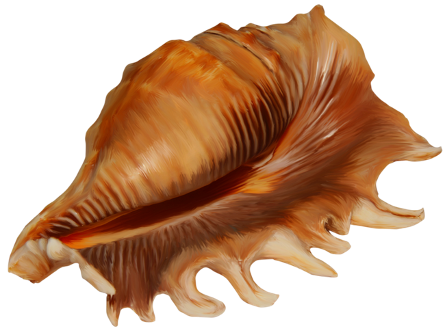 Conch png images free. Shell clipart shankh