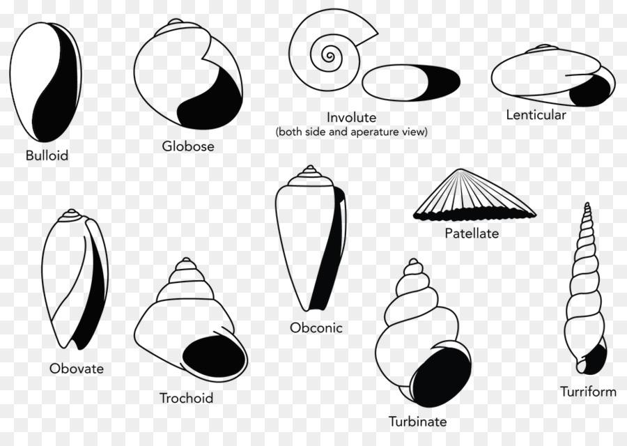 Shell clipart shape. Logo seashell snail transparent