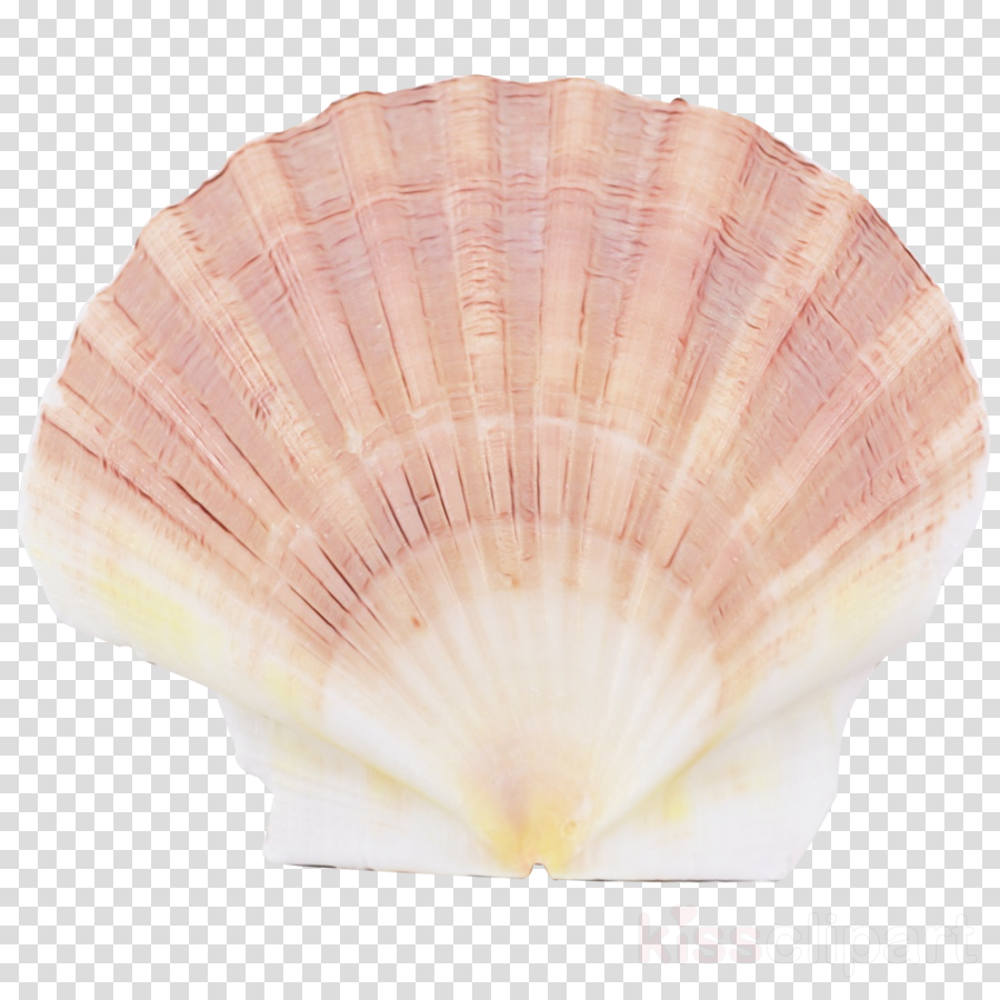Shell clipart shell scallop. Pink bivalve shellfish