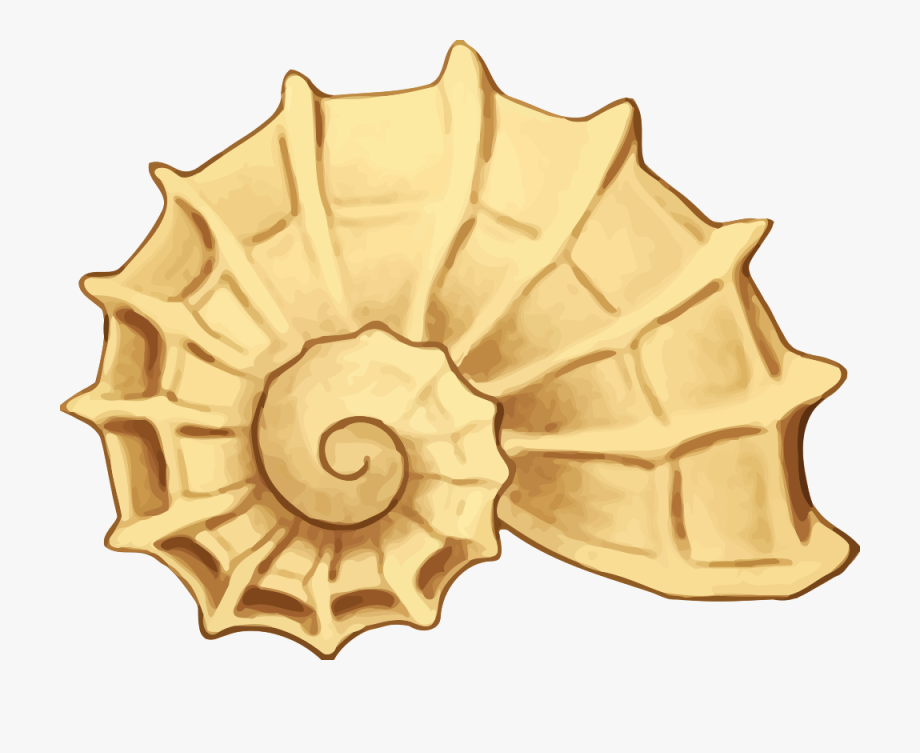 Clip art png free. Shell clipart shell sea