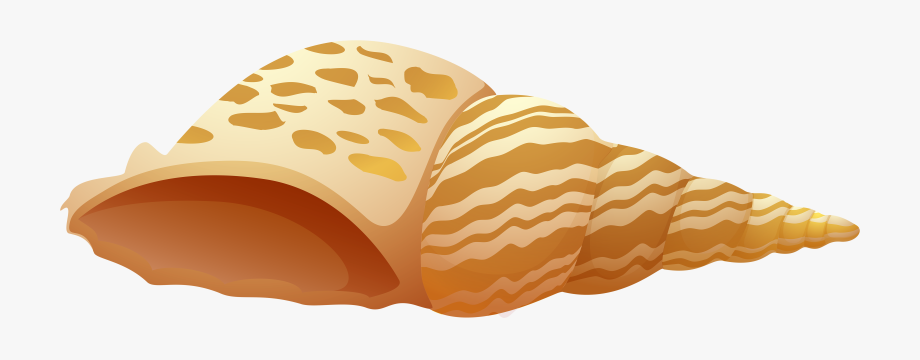 Shell clipart shell sea. Png clip art free