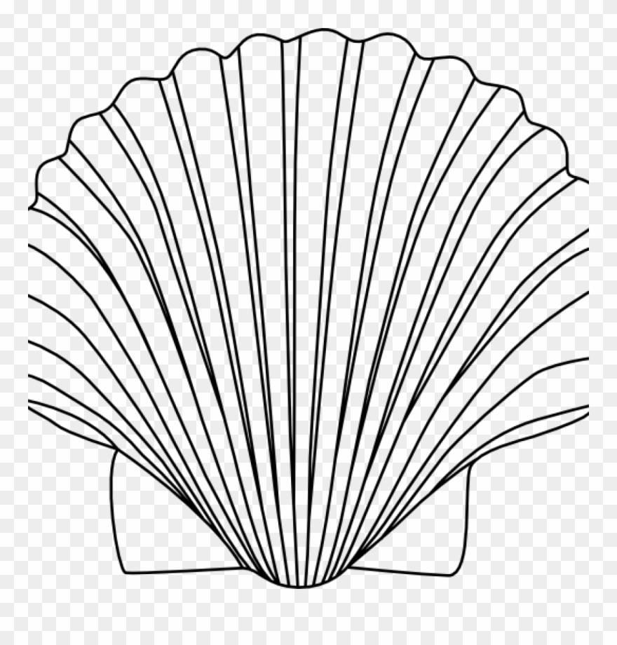 Shell clipart shell sea. Shells black and white