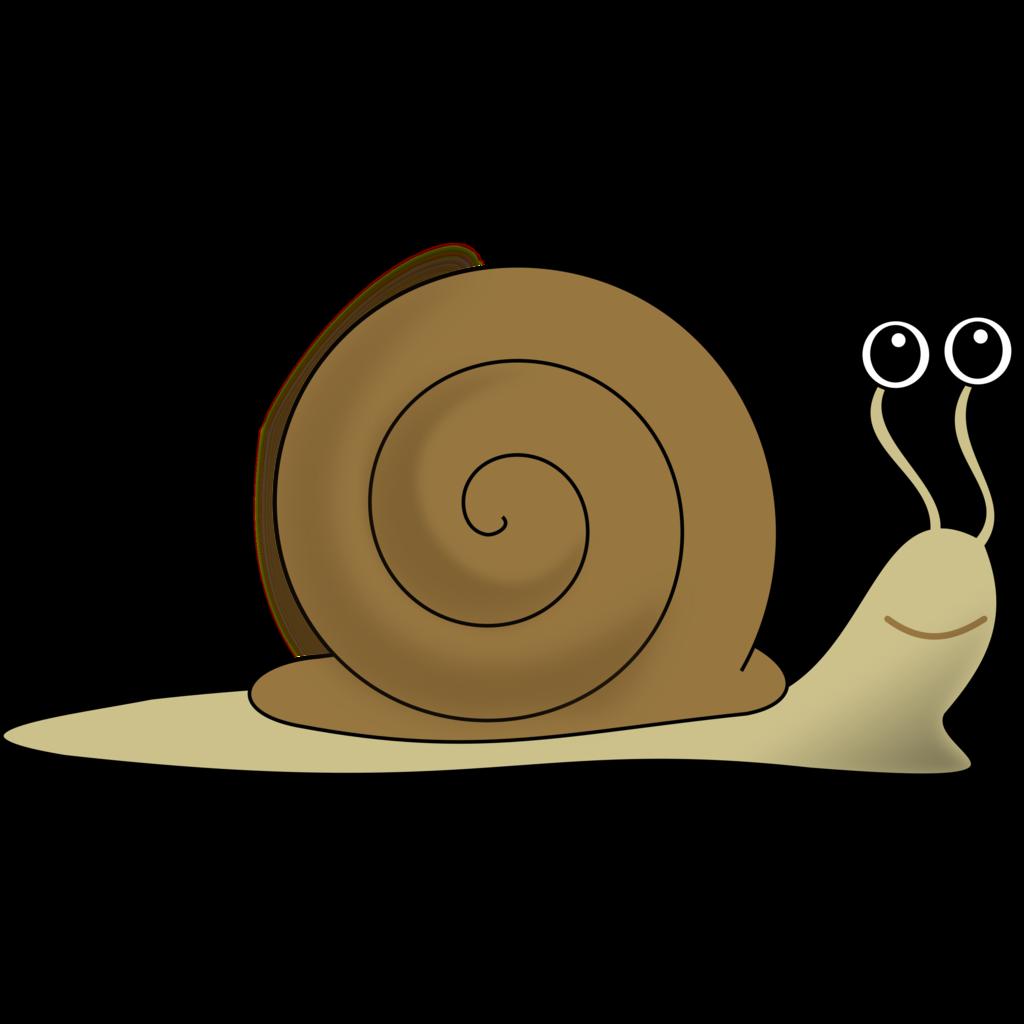Clip art transprent png. Shell clipart shell snail
