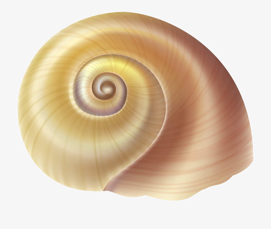 Shell clipart shell snail. Pencil and in color