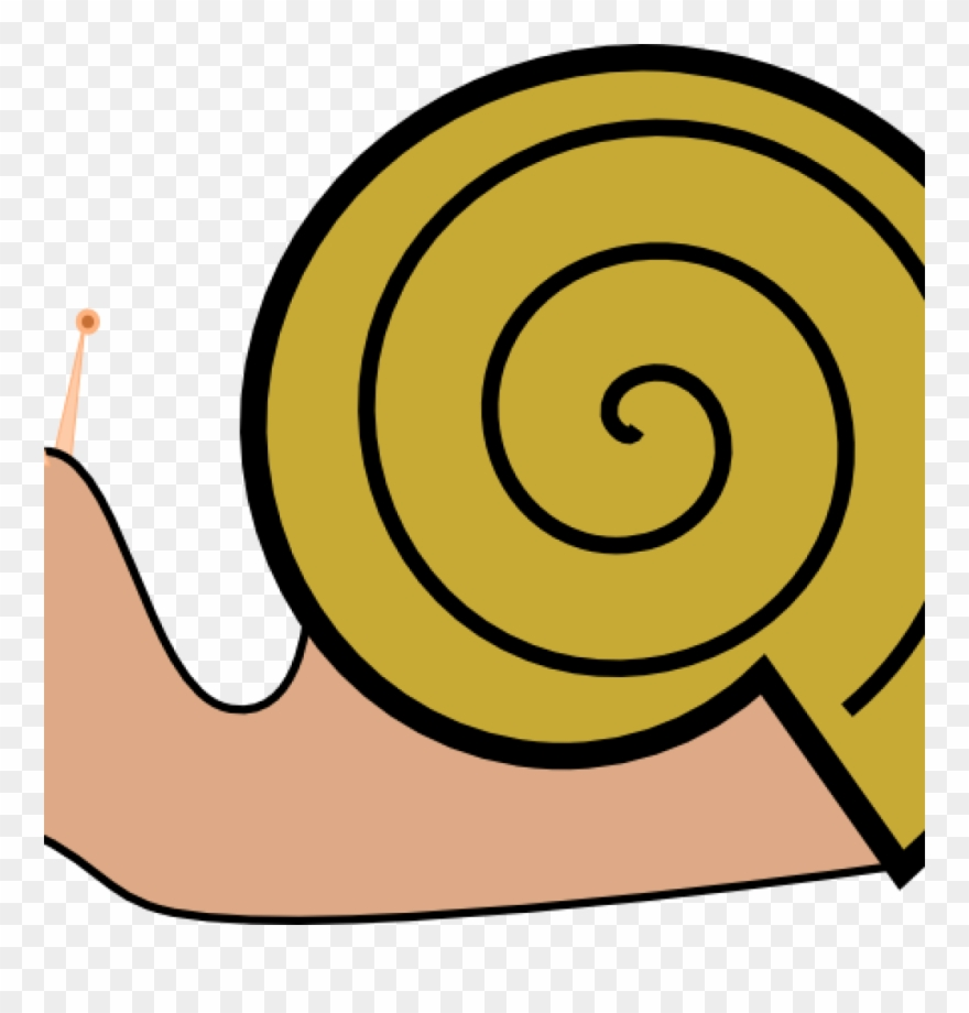 Pond cartoon png . Shell clipart shell snail