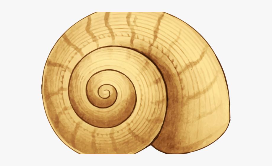 Shell clipart shell snail. Seashell seaside free