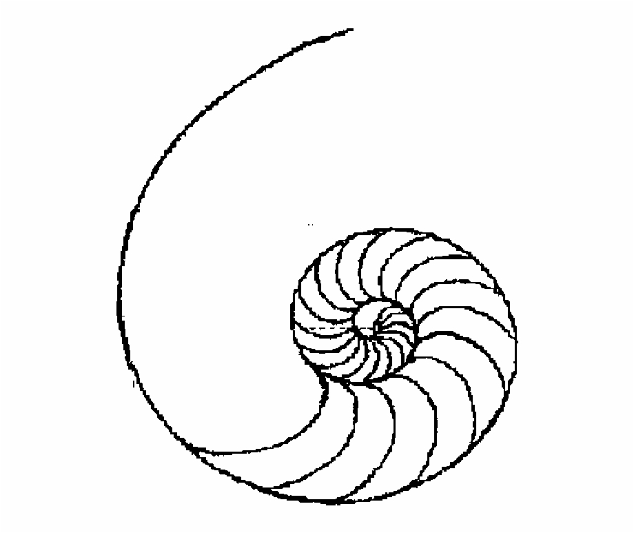 Drawing easy line art. Shell clipart simple