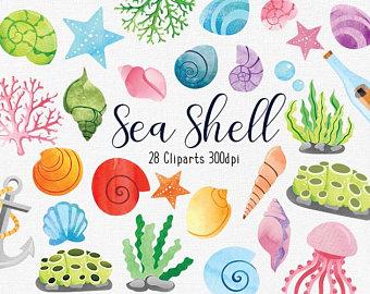 Shell clipart small. Seashell etsy