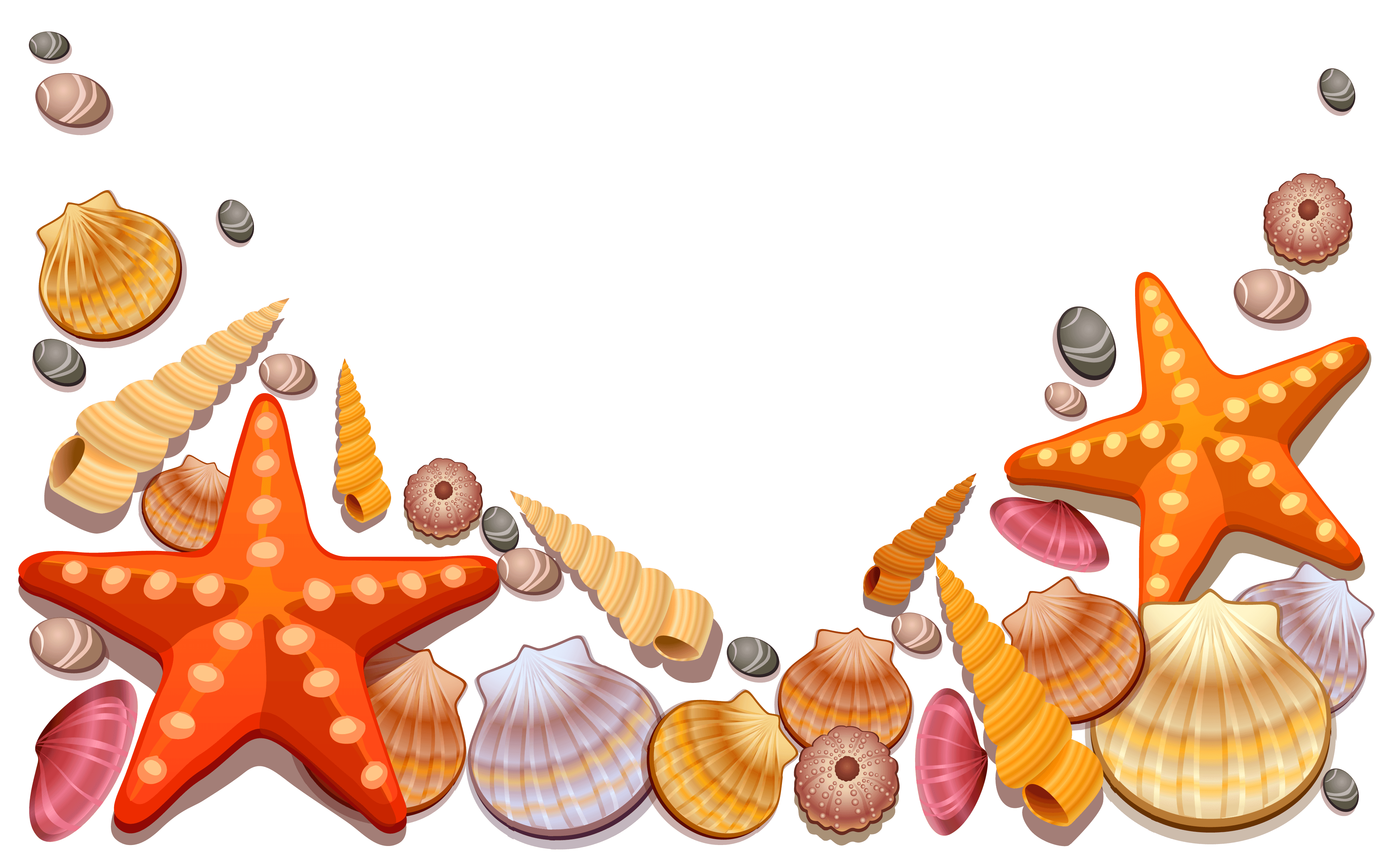 Shell clipart starfish wedding. Conch at getdrawings com