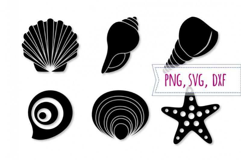 Set starfish seashell beach. Shell clipart svg