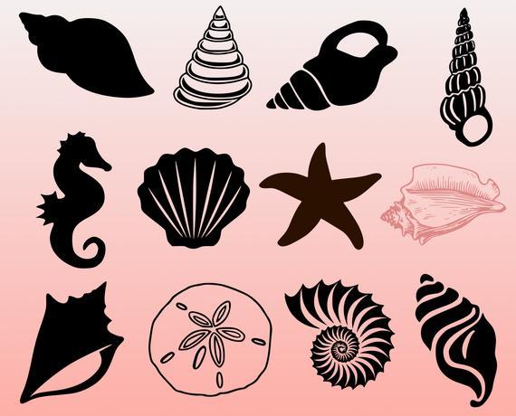 Seashell bundle cut files. Shell clipart svg