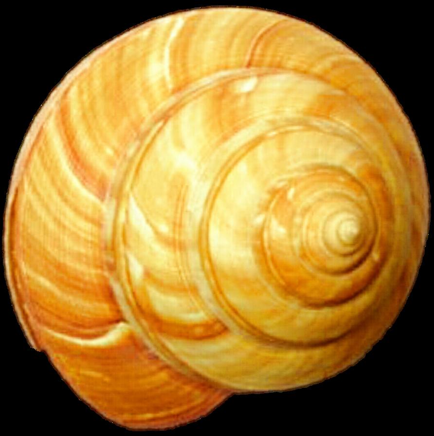 Orange by jeanicebartzen on. Shell clipart swirl