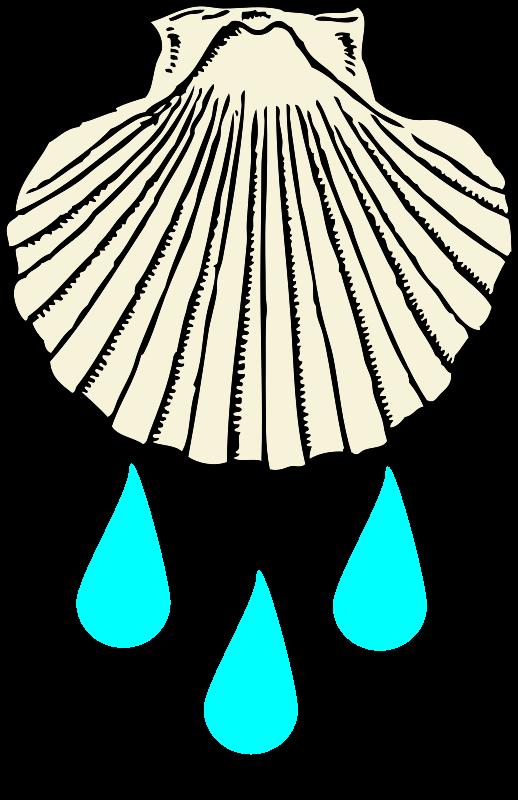 Baptism medium image png. Shell clipart teal