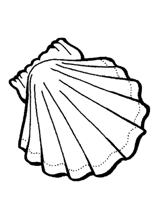 Seashell best . Shell clipart template