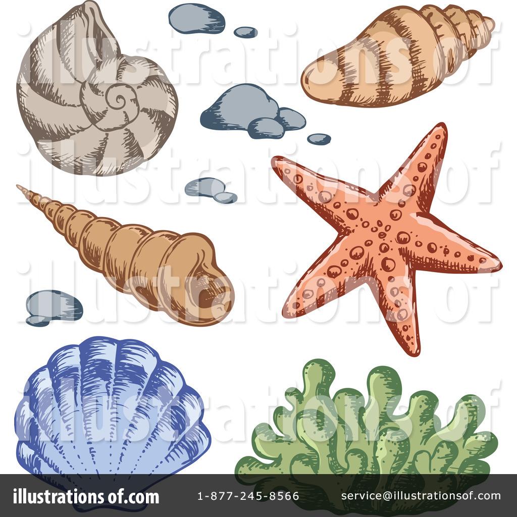 Shells illustration by visekart. Shell clipart under sea