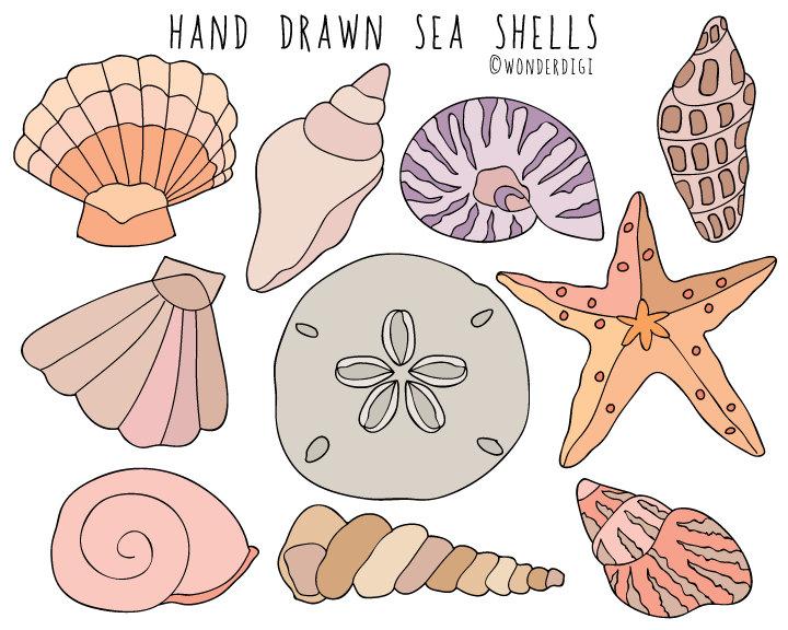 Sea shells hand drawn. Beach clipart seashell