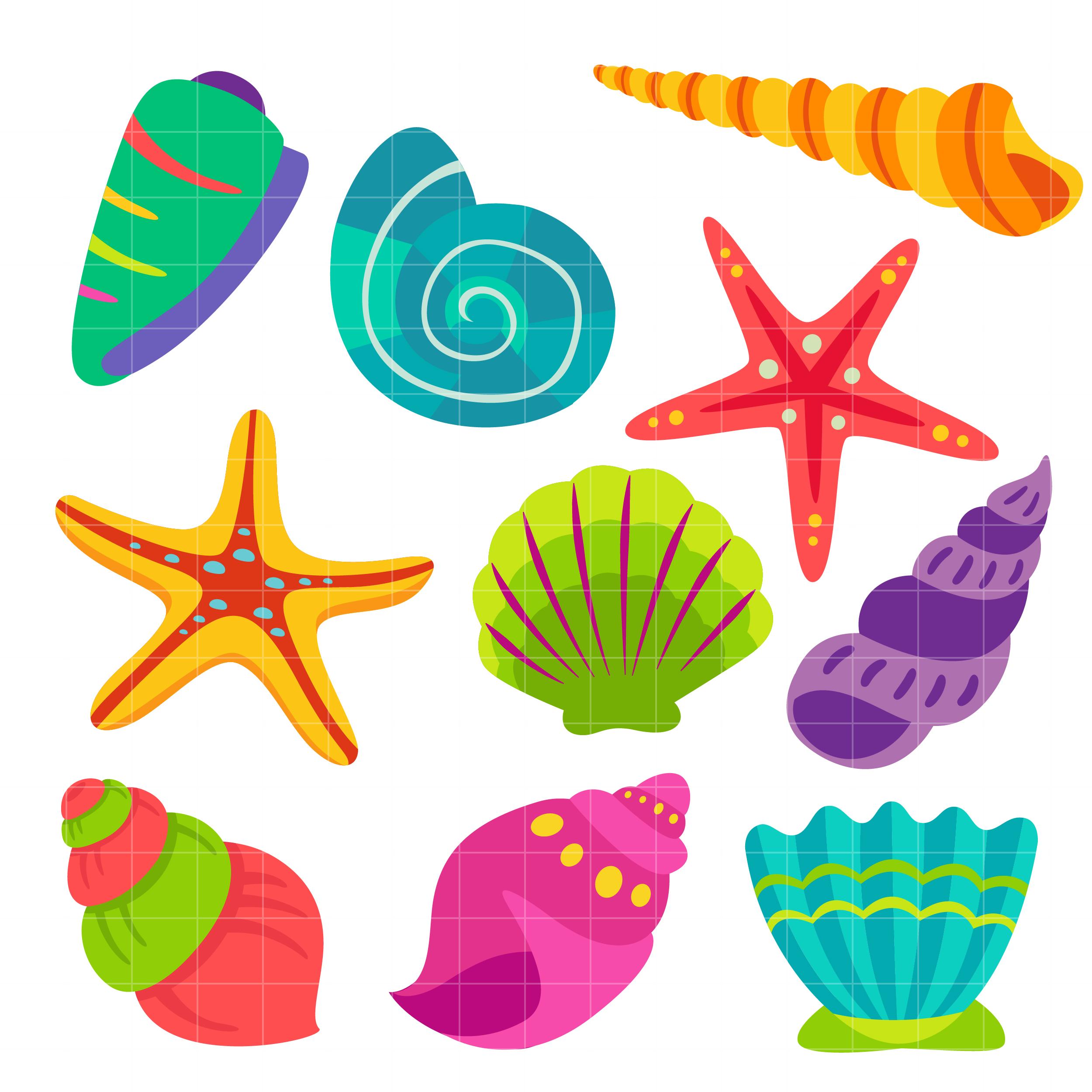 Sea shells . Shell clipart colorful