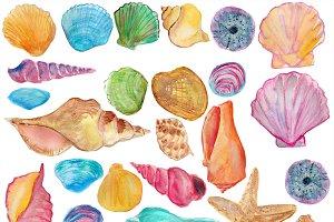 Shells watercolor clip art. Seashells clipart