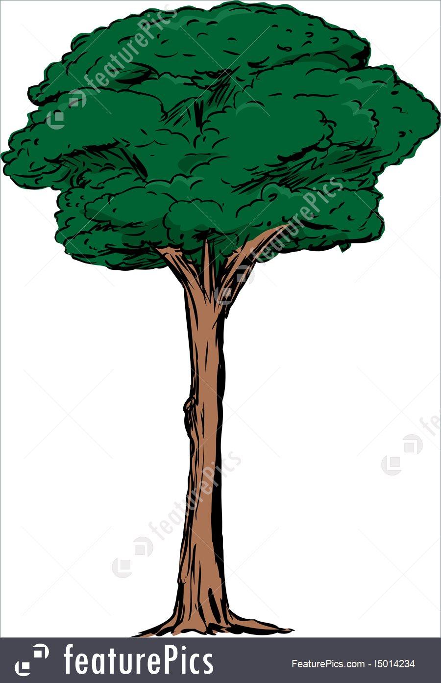 Free download best on. Tall clipart tall tall tall tree