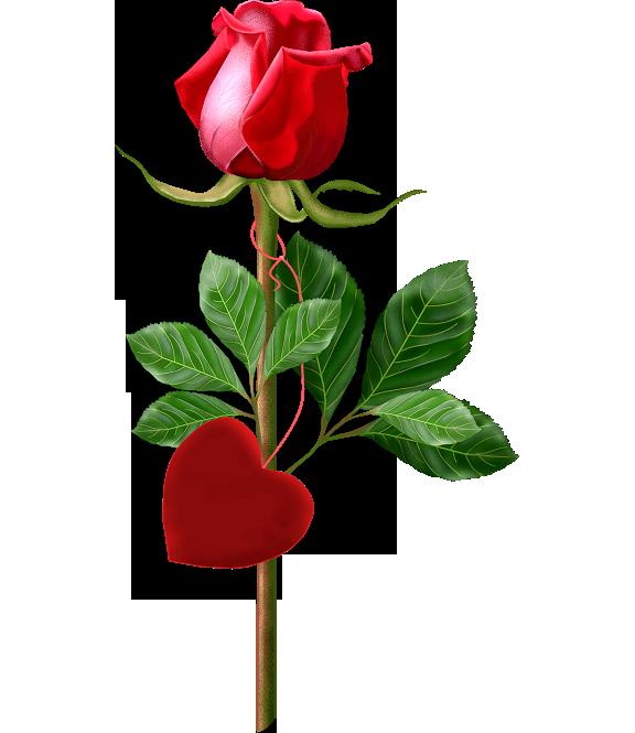 Single flower png, Single flower png Transparent FREE for
