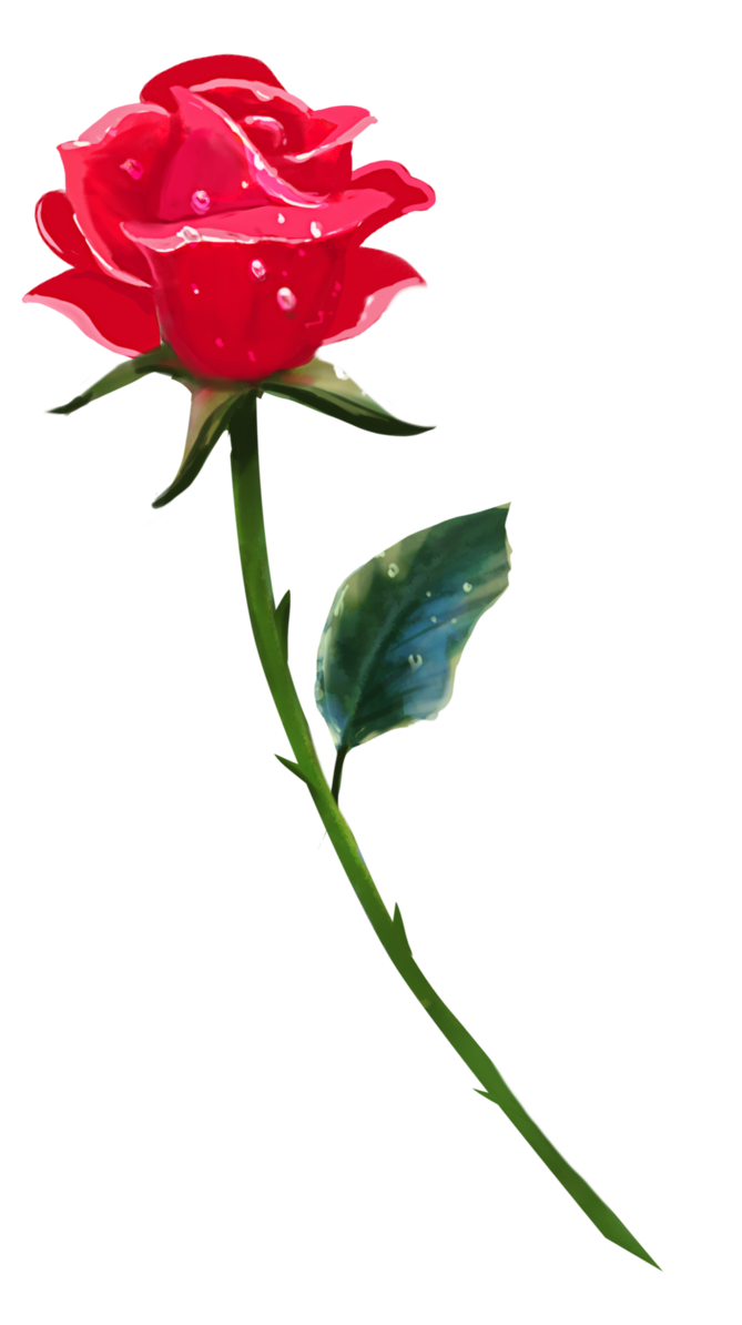 A rose by brookegillette. Single flower png