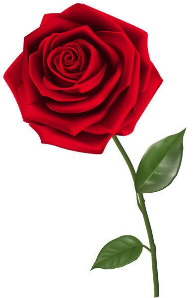 Single flower png. Red rose clipart image
