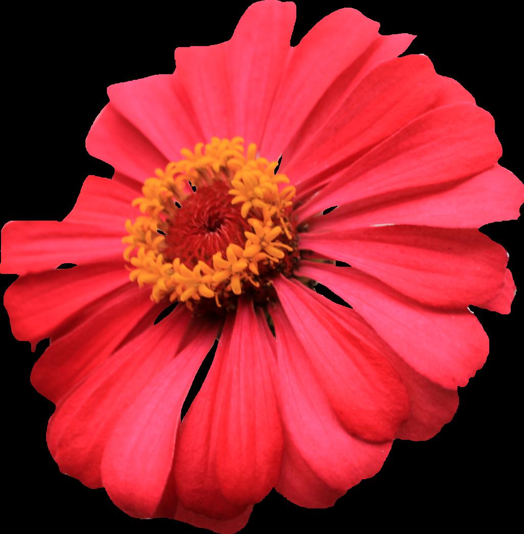 Transparent images pluspng pluspngcom. Single flower png