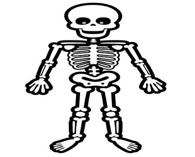 Bones clipart simple. Human skeleton free download