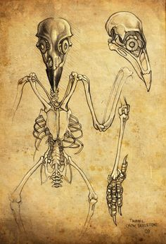 best skeletons images. Skeleton clipart crow