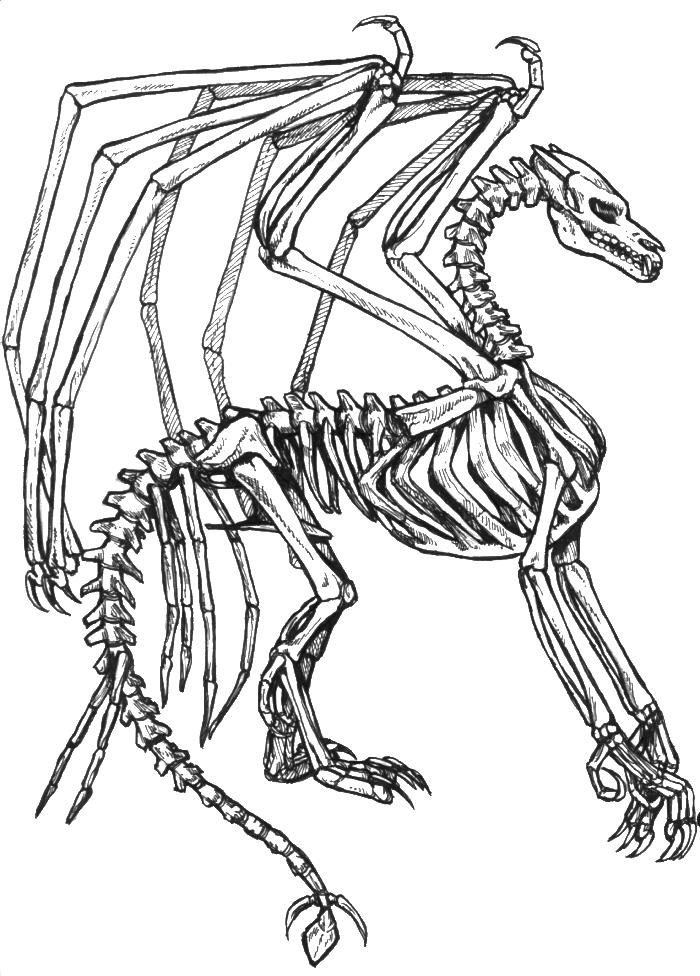 Skeleton Coloring