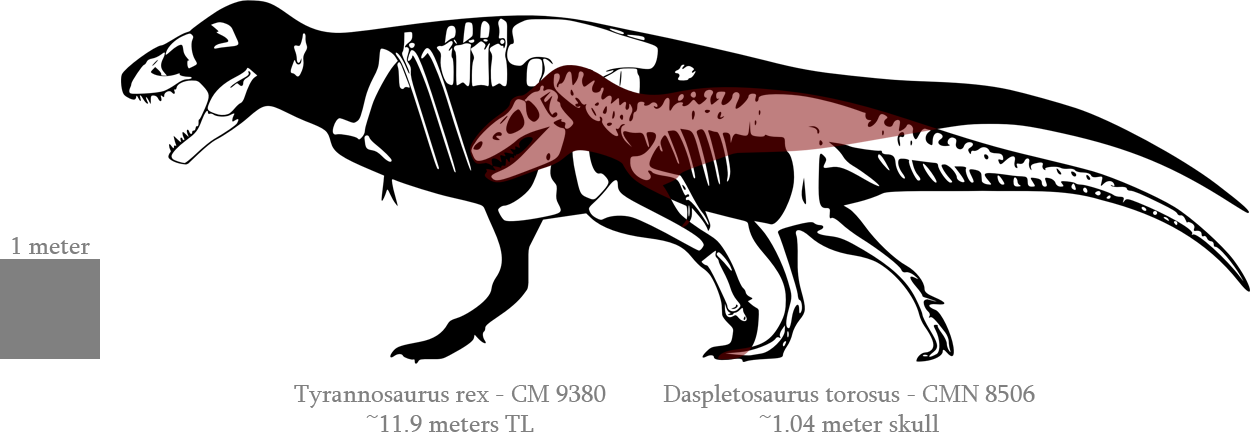 A theory on the. Skeleton clipart trex