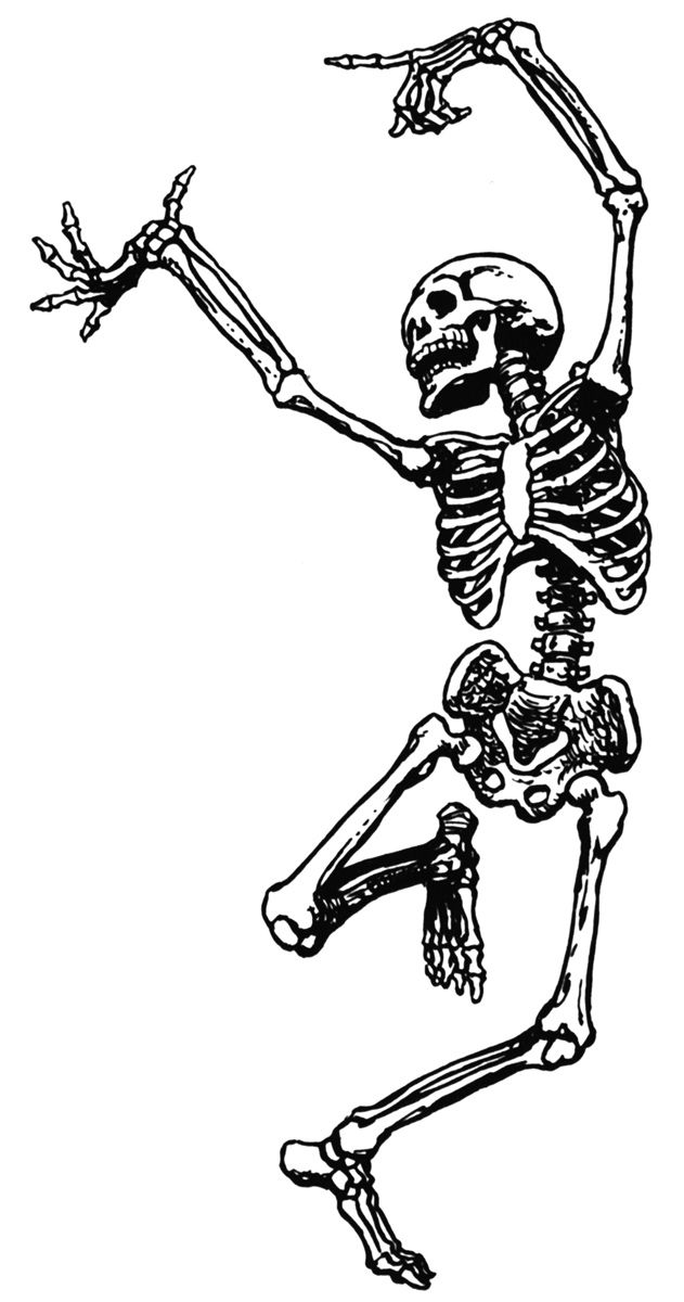 Skeleton clipart. Clip art walking skeletons