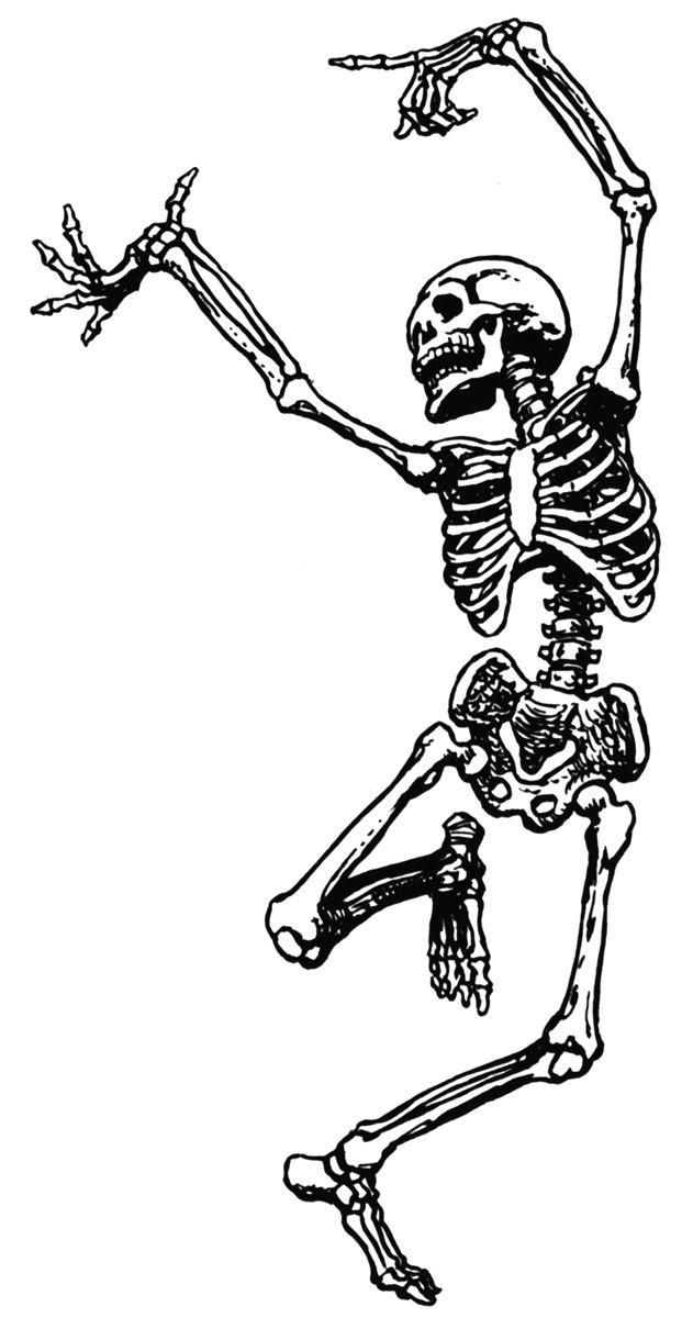 Bones clipart simple. Clip art walking skeletons