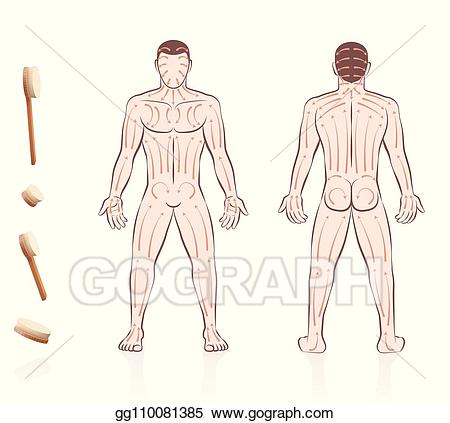 Skin clipart back body. Vector art brushing direction