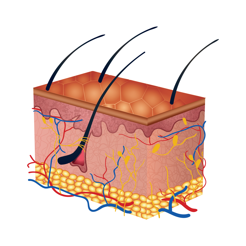 What s lurking inside. Skin clipart back body